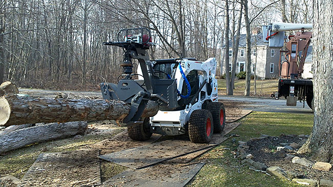 bobcat-tree-removal