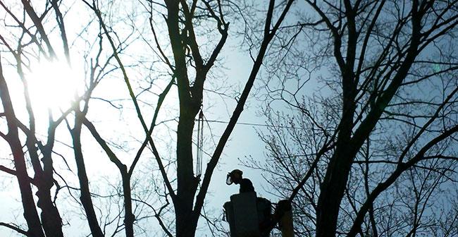 tree-climber